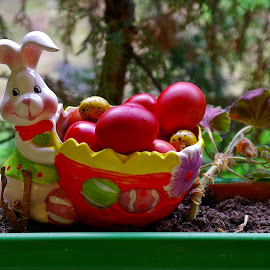Easter bunny by Ciprian Apetrei - Public Holidays Easter ( painted eggs, ploiesti, easter, funny, decorations )