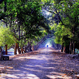 Beautiful Forest by Umesh Soni - Landscapes Forests ( bird century )