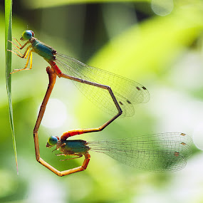 love by Nordin Seruyan - Animals Insects & Spiders