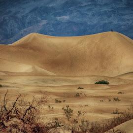 One Big Dune by Richard Michael Lingo - Landscapes Deserts ( death valley, desert, sand dune, california, landscape )