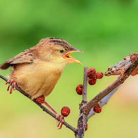 My Little Friend by MazLoy Husada - Animals Birds
