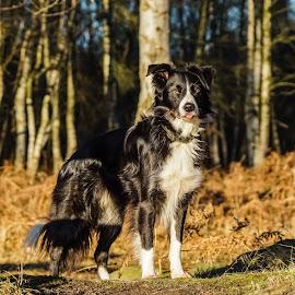 by Sue Lascelles - Animals - Dogs Portraits