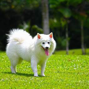 I love Sunny by Sim  Chee teck - Animals - Dogs Portraits ( love, park, sunny, dog, singapore )