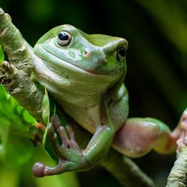 by Joy Advent - Animals Amphibians (  )