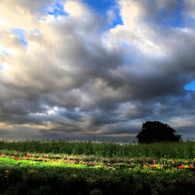 Flowers field by Cristobal Garciaferro Rubio - Landscapes Cloud Formations ( clouds, field, sky, sunflowers, flowers )