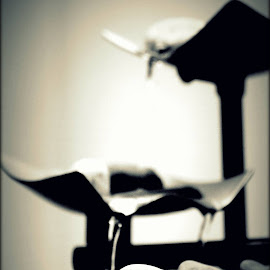 The Flow...Continuity of life in words of water!! by Nipun Shedhani - Artistic Objects Furniture ( water fountain, life )