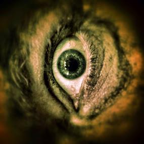 The Eye by Geary LeBell - Instagram & Mobile iPhone ( see, seeing, scared, shocked, dead, eye ball, surprise, horror, eyeball, eye )