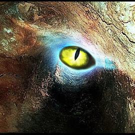 You're Being Watched by Diane Haas - Digital Art Animals ( tree, snake eye, digitl art, sci fi, green eye )