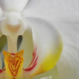 by Lori Kulik - Nature Up Close Other plants