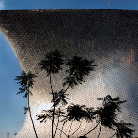 Soumaya museum by Cristobal Garciaferro Rubio - Buildings & Architecture Public & Historical ( blue sky, mexico city, mexico, museum, palms, soumaya )