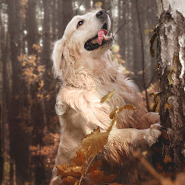 Golden Morsik :) by Kasia Doroszkiewicz - Animals - Dogs Portraits ( #golden #retriever #love #animals # pet )