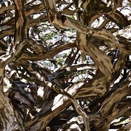 by Joe Rahal - Nature Up Close Trees & Bushes