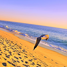 Seagull on the Wing by Robyn Gael Ellsworth - Landscapes Beaches ( water, bird, flying, beach, landscape )