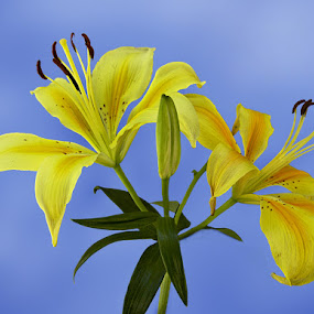 We two by Arvind Akki - Nature Up Close Flowers - 2011-2013 ( flowers,  )