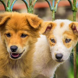 Very excited by Kriswanto Ginting's - Animals - Dogs Portraits ( fence, puppies, dogs, nikon d3100, purple, dog portrait, puppy, nikon, dog,  )