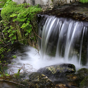 Let be free by Gil Reis - Nature Up Close Water ( places, nature, bio, water, life )