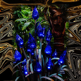 lite painting by Walter Richardson - Abstract Light Painting ( abstract, lite painting, night, flowers )