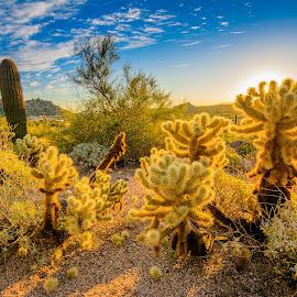 Cactus Sunrise by Ralph Resch - Landscapes Deserts ( sunrise, cactus )