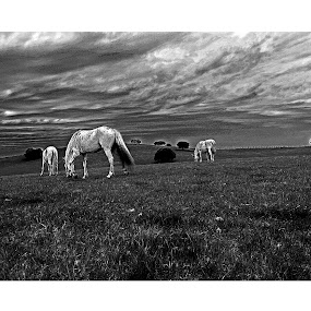 by Rui Gonçalves - Animals Horses