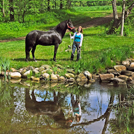 Equine Reflections by Reuss Griffiths - Animals Horses ( sunny morning, horse, farm pond, reflections )