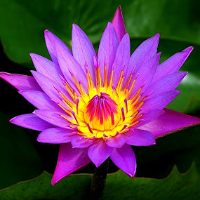 by Deepa Sarathy - Nature Up Close Flowers - 2011-2013 ( macro, lotus, lilly,  )