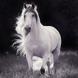 by Kelley Hurwitz Ahr - Animals Horses ( horse, kelley hurwitz ahr, workshop, visel, kelley ahr )