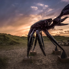 The Crab by Ole Steffensen - Buildings & Architecture Statues & Monuments ( sculpture, jammerbugten, slettestrand, sunset, krabben, denmark, the crab )