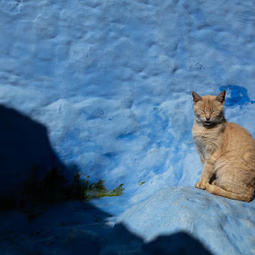 Cat by VAM Photography - Animals - Cats Portraits ( places, cat, animal, morocco, travel )