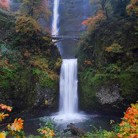 Multnomah Falls by Chris Bartell - Landscapes Waterscapes ( oregon, autumn, multnomah, landscape, water fall,  )