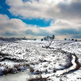 Dr Seuss In Minnesota  by Chris Olson - Landscapes Prairies, Meadows & Fields