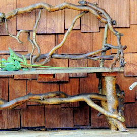 Bench of Branches by Becky Luschei - Artistic Objects Furniture ( twisted, bench, fashioned, cute, branches )