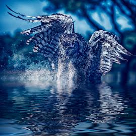 Owl dive by Egon Zitter - Digital Art Animals ( water, bird of prey, splash, blue, sunset, drops, owl )