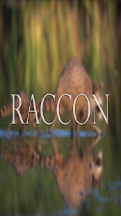 Raccon Wallpaper HD Complete - screenshot