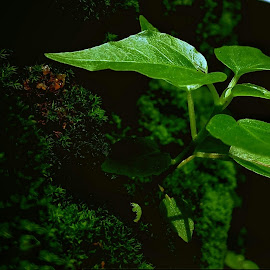The baynian tree by Rajesh Mondal - Nature Up Close Other plants ( mobilography )