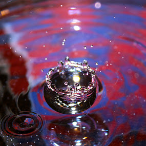 Splash by Alex Nicholson - Novices Only Macro
