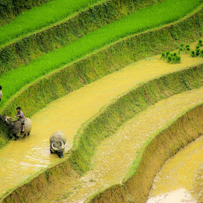 Sapa, Vietnam by Alister Munro - Landscapes Travel (  )