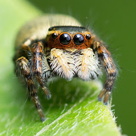 by Allen Wu - Animals Insects & Spiders