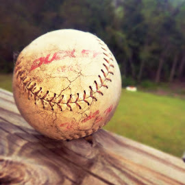 Baseball by Janet McElroy Schmitt - Novices Only Sports ( ball, life, baseball, sports, still )