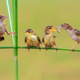 A beautiful Bird family  by MazLoy Husada - Animals Birds