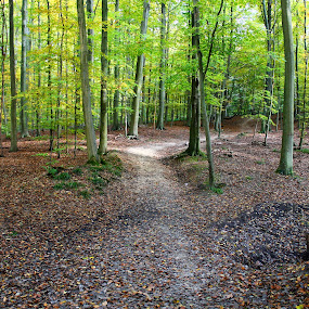 In the park by Ingrid Dendievel - Landscapes Forests ( park, trees, belgium, tervuren )