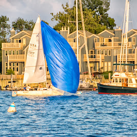 Blue Sailboat by Carol Ward - Transportation Boats ( water, annapolis, sailboats, boats, annapolis md, transportation, waterscapes )