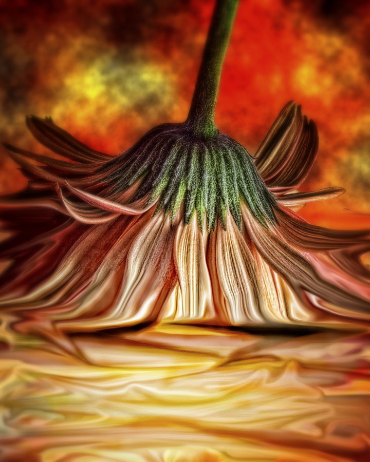 Orange Crush by Kelli Lauck - Digital Art Things (  )