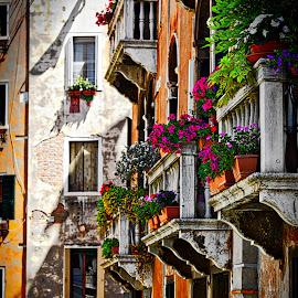 Venice by Jim Antonicello - Buildings & Architecture Architectural Detail ( canals, buildings, venice, flowers )