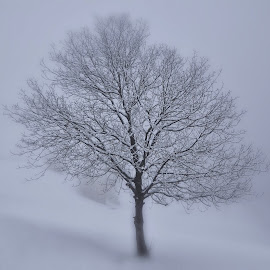 Osamljen by Bojan Kolman - Nature Up Close Trees & Bushes