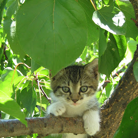 by Tatjana Veličković - Animals - Cats Kittens