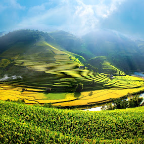 Gold season  Viet Nam  by TAN NGUYEN MINH - Landscapes Mountains & Hills