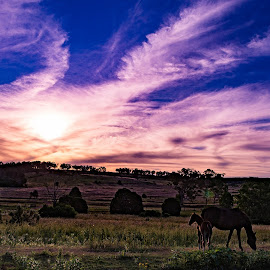 The Cool Evening by Sarah Sullivan - Novices Only Landscapes