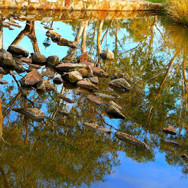 Pond Rocks by Leigh Martin - City,  Street & Park  City Parks ( pond water rocks reflection )