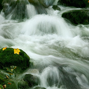 green carpet by Gregor Znidarsic - Nature Up Close Water ( stream, autumn, moss, watter )
