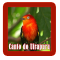 canto do uirapuru 2017 APK for Bluestacks